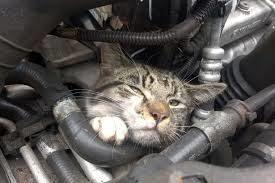 cat-car-hood-5-6950009