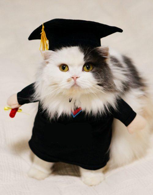 graduate-cat-costume-3938523