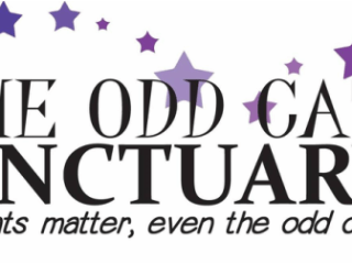 The Odd Cat Sanctuary - They believe all cats matter, even the odd ones. #OddCat #OddCatSanctuary