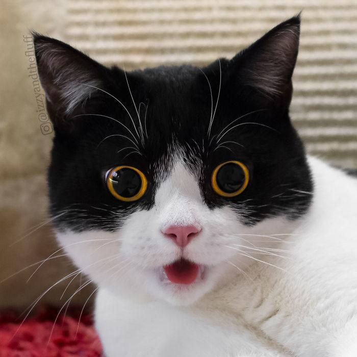izzy-cat-3725764