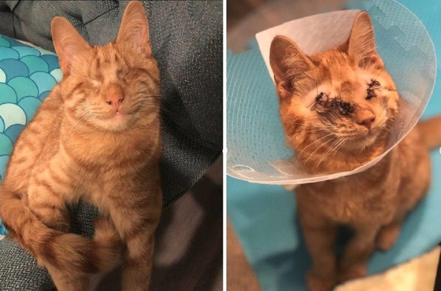 yoyo-blind-cat-6840392
