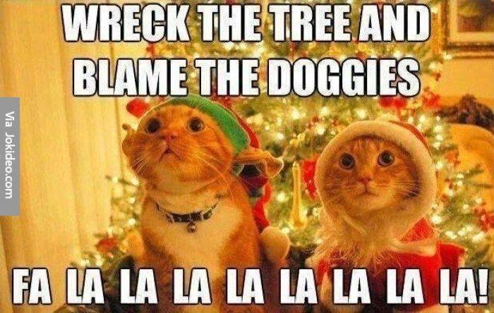 blame-the-doggies-5081126