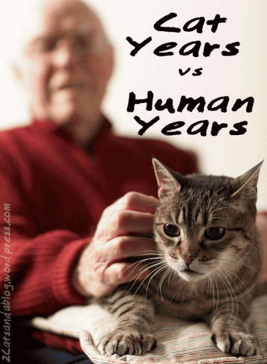 catyears-vs-humanyears-9239484