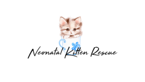neonatal-kitten-resuce-tri-cities-3916758