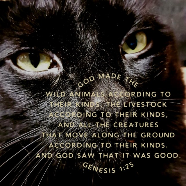 Joel the Brave from 2 Cats and a Blog - God made the wild animals according to their kinds, the livestock according to their kinds, and all the creatures that move along the ground according to their kinds. And God saw that it was good. Genesis 1:25