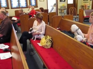 Dogs Allowed at Church? - One church allows dogs in its service. They say dogs are welcome too. But, what about the people allergic to dogs?