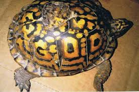 Turtle with God written on shell