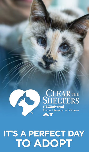 cleartheshelters-6579759