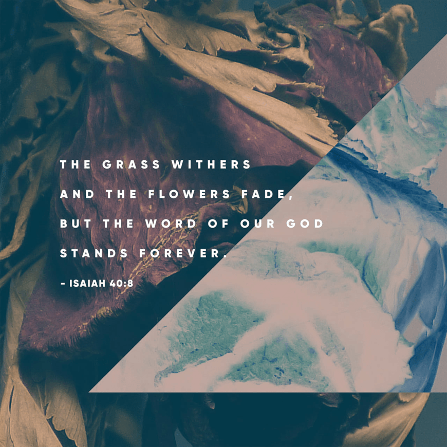"VOTD November 28 - ""The grass withers, the flower fades, But the word of our God stands forever."" Isaiah 40:8 NASB"