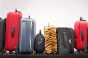 Donate Luggage to your local foster care agency