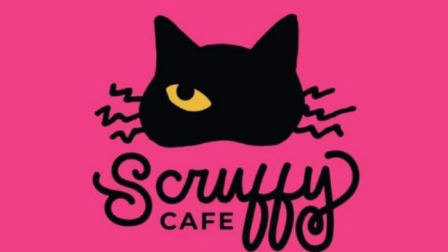 Scruffy Cafe: New cat cafe coming to Knoxville Spring 2020. A place to meet adoptable pets all in a cafe in Knoxville. #ScruffyCafe #CatCafe #Knoxville