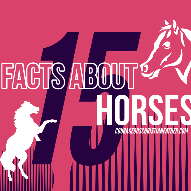 15 facts about horses - Horses are majestic and fascinating animals, and these 15 interesting facts show just how incredible these beautiful animals are.