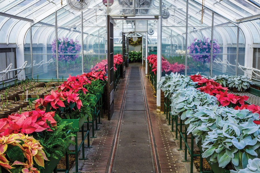 Simple ways to prolong the life of poinsettias - With proper care poinsettia plants can continue to thrive and bring warmth and beauty to a home long after the holiday decorations have been tucked away.