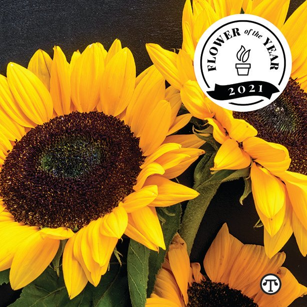 The Sunflower The Flower of the Year and The Praying Plant as the Plant of the Year for 2021 - 1-800-Flowers.com has named the sunflower as 2021's Flower of the Year and the Prayer Plant as Plant of the Year. The Praying Plant is also known as the Maranta. #Sunflower #PrayerPlant #Maranta