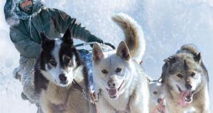 nicolas vanier avec ses chiens