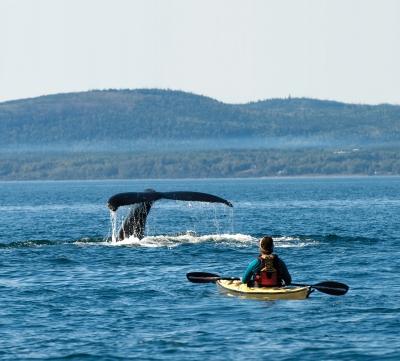 kayak baleine