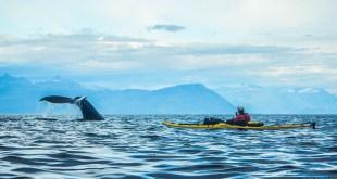 kayak en terre sauvage film Alexandre JACQUET Clément Lejealle