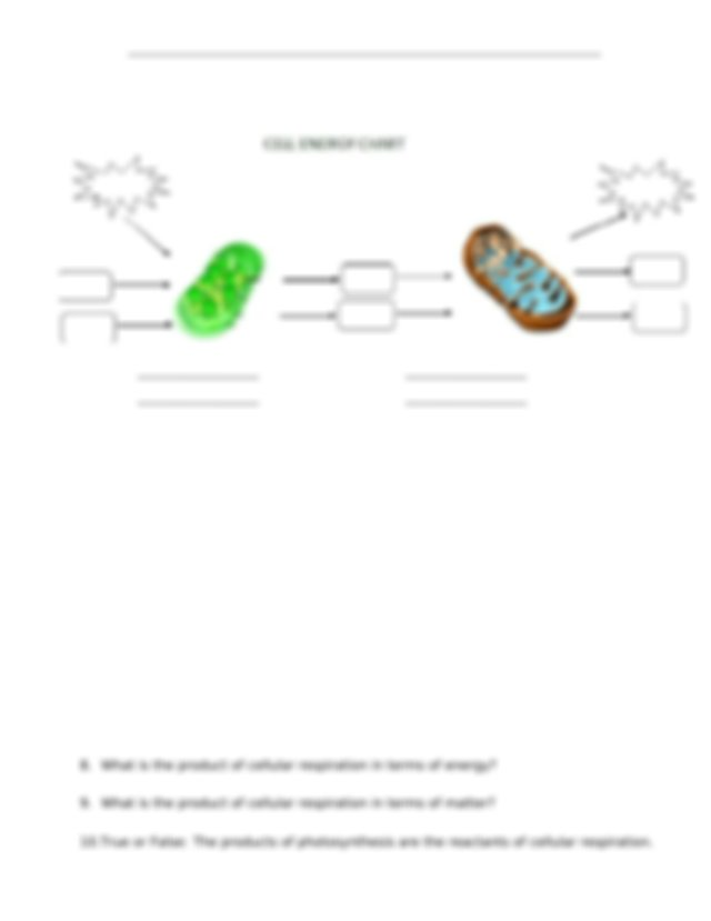 Cell Energy Flow Review-Photosynthesis and Respiration.doc
