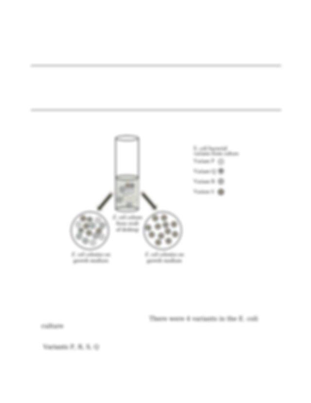Evolution and selection worksheet biology 2015 UCHS