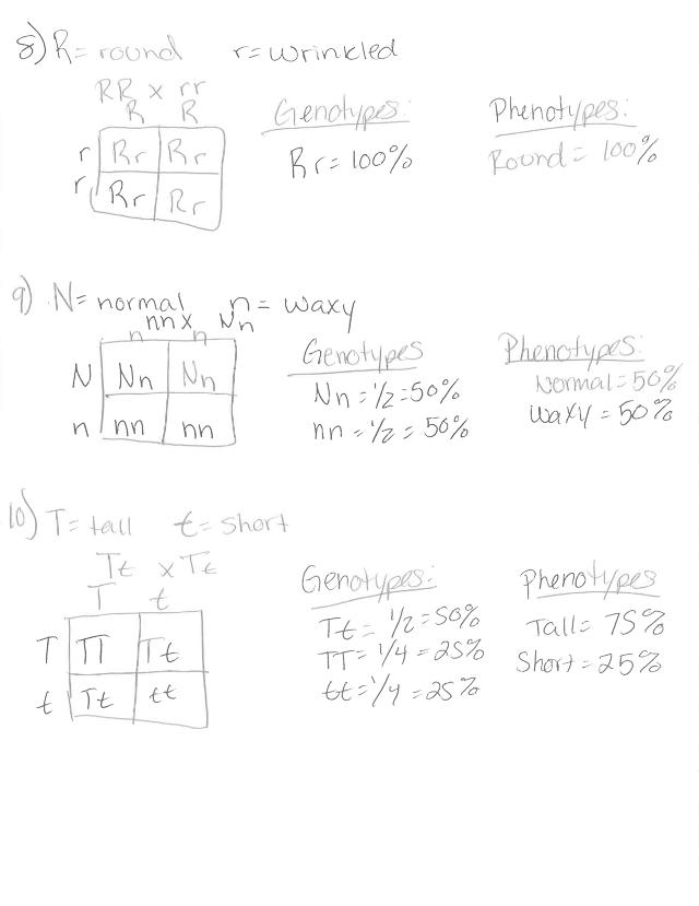 monohybrid_practice_problems_1_answers-1dou2nj