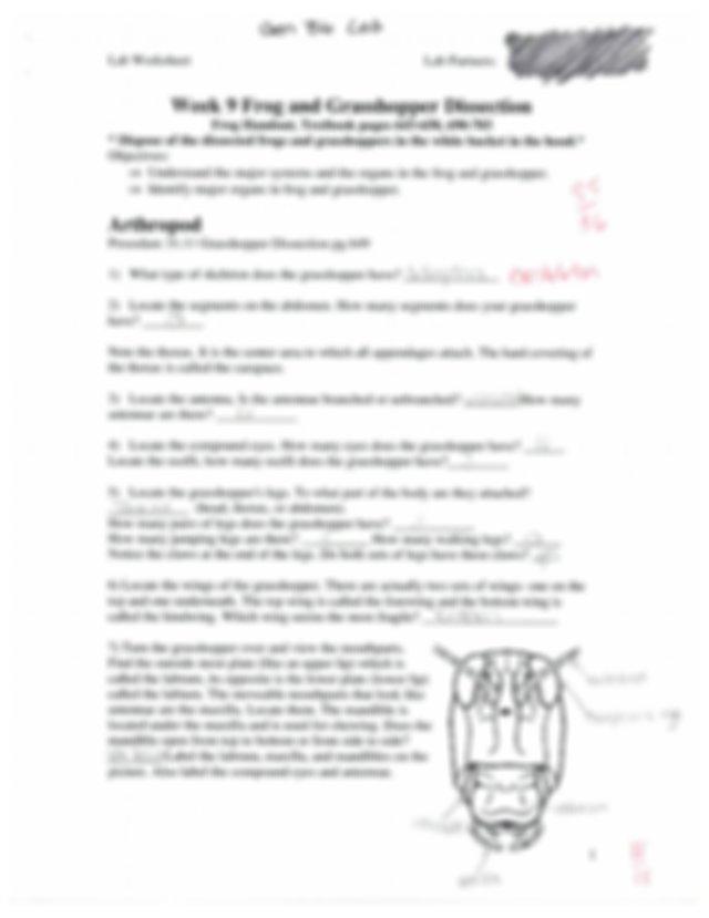 Frog And Grasshopper Dissection Worksheet
