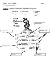 14 Which enzyme is responsible for unzipping the DNA