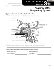 Exercise 36 Review Sheet Anatomy of the Respiratory System