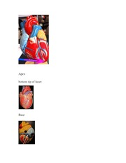 anterior heart diagram unlabeled ford fiesta mk7 5 wiring page1 page2 page3 tricuspidvalve aorta 10 pages ch 22 the