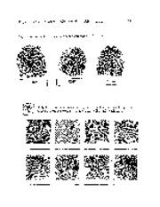 fingerprint minutiae practice WS
