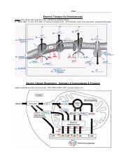 Electron Transport Chain Study Resources