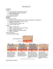 Pharmacology Worksheet