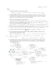 28+ [ Chapter 20 Viruses And Prokaryotes Worksheet Answers ...