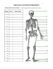 Skeletal System Worksheet 1 Skeletal System Worksheet Human Skeletal System Number Color 1 2 3 4 5 6 7 8 9 10 11 12 13 14 15 16 17 18 19 20 Color The Course Hero