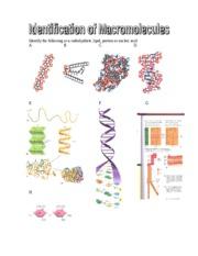 Identification Worksheet 2 Types Of Macromolecules