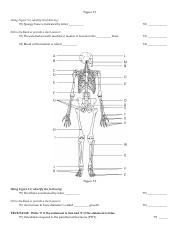 essentials-of-human-anatomy-physiology-15th-test-bank