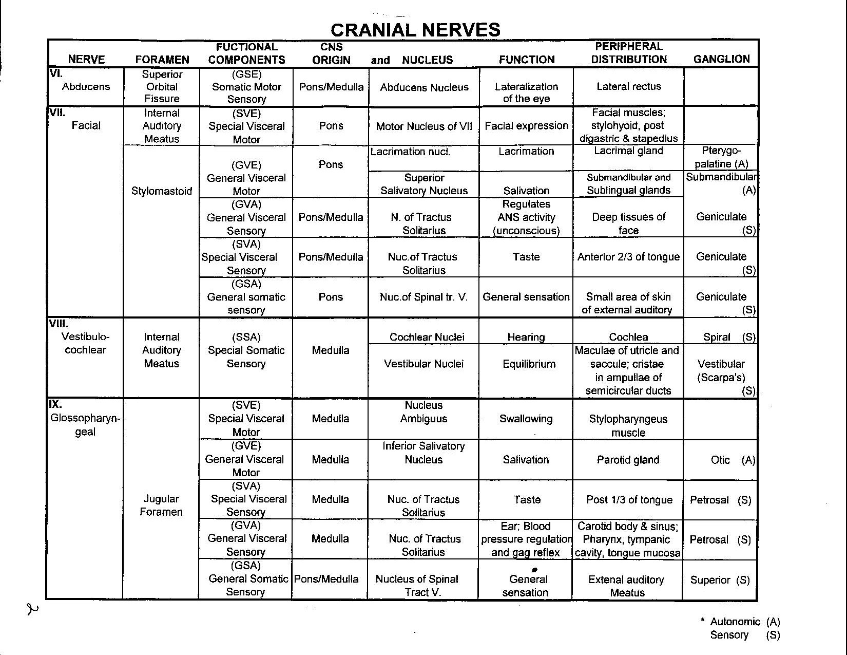 Anat Cranial Nerve Detailed Spreadsheet 2