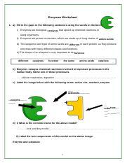 Enzymes Worksheet Cx