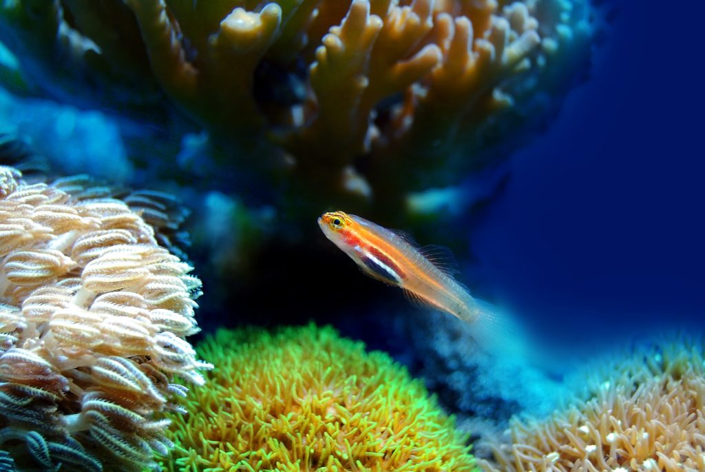 Courses in Marine Biology in Ireland
