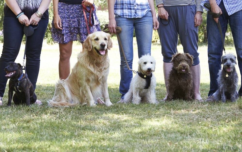 Get to know Man's Best Friend with a Dog Training Course