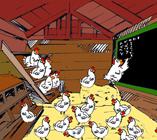 Het kippenparlement