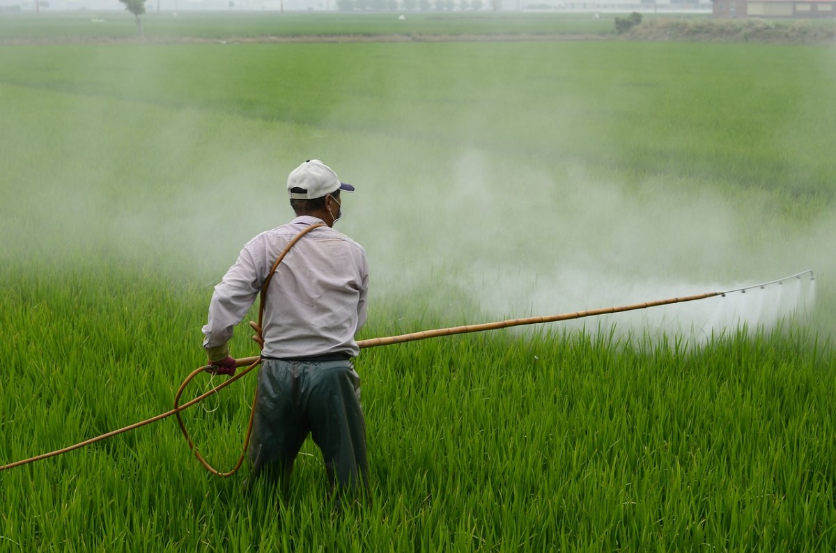 Study Links Bangladeshi Children's Deaths to Pesticide
