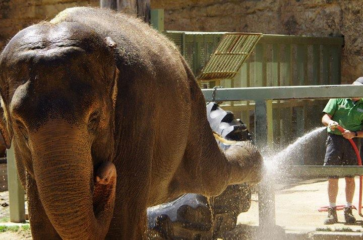 Lucky The Elephant Will Get Her Day In Court