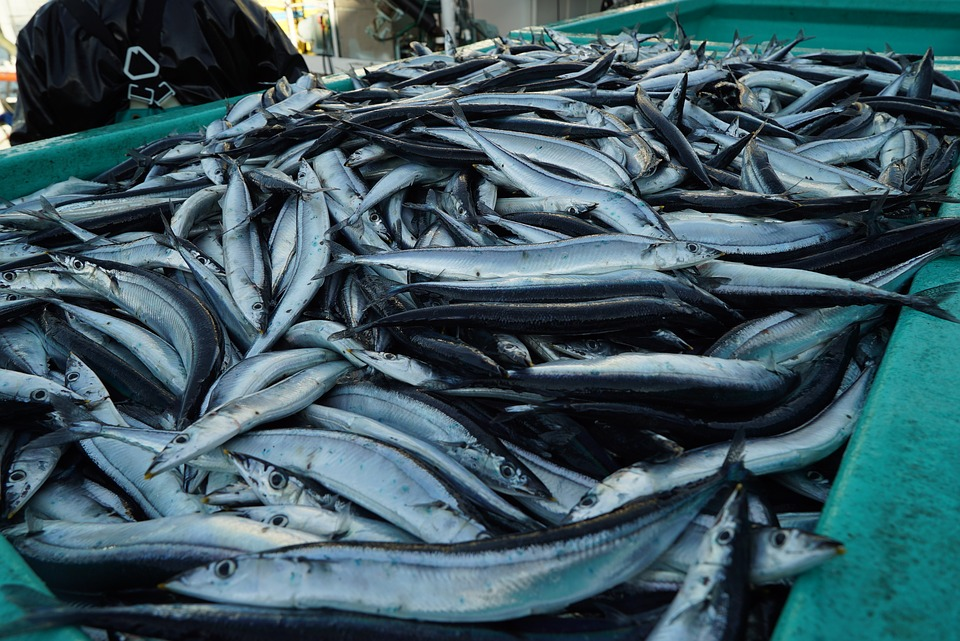 Epa oks rules for mercury in california fish for Fish with least mercury