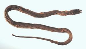 Snake-w-Fungus.jpg?resize=300%2C170