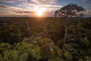 Amazonian-forests.jpg?resize=300%2C200