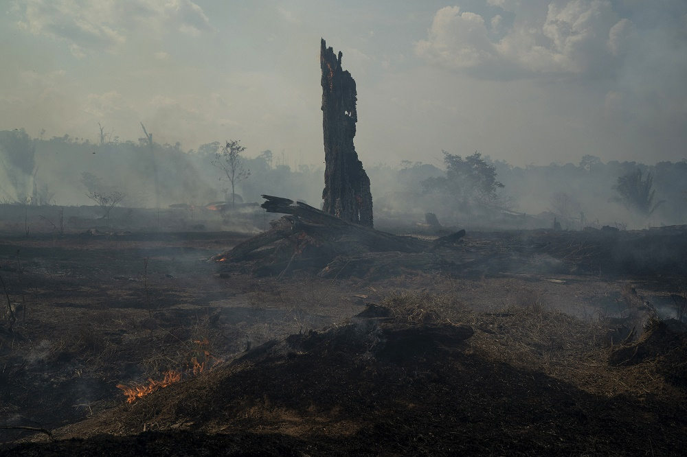Amazon Rainforest Fires Take Center Stage at House Hearing