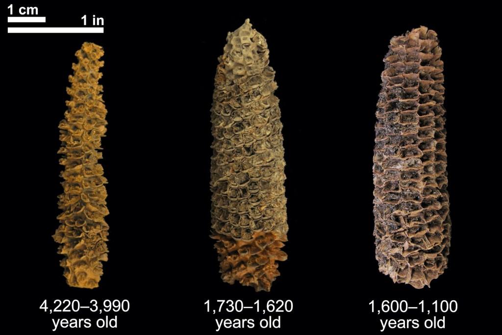 maize-trio.jpg?resize=1024%2C683&ssl=1