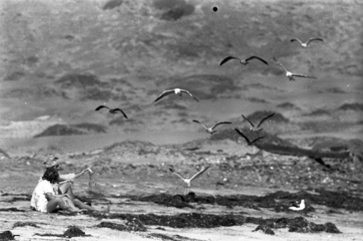 Birds and Baja, summer 1967. From Walt Girdner's Mexico collection.