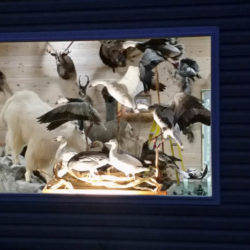 Mehlhop Four Season Taxidermy (136)