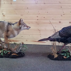 Mehlhop Four Season Taxidermy (206)